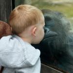Clic clac foto… Besitos de gorila