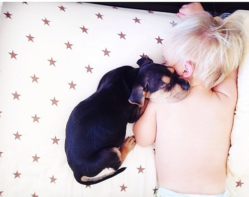 cachorro y bebe