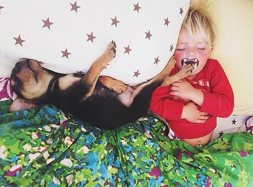 fotos niño perro 1