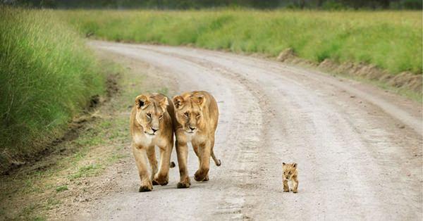mama-papa-leon