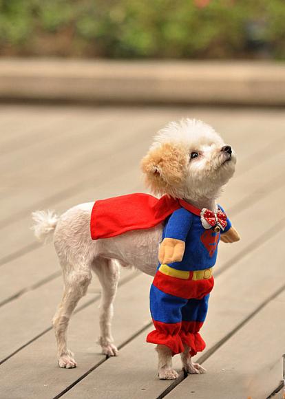 Clic clac foto … Super dog