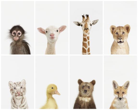 no es necesario educar a los nios para que les gusten los animales nacen con una simpata natural hacia ellos simpata que va creciendo o en