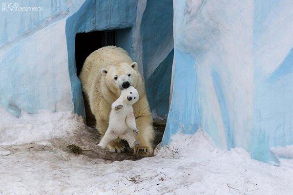 mama-oso-fotos